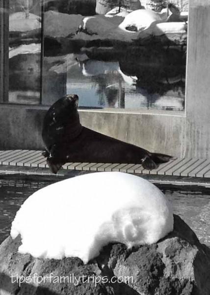 Hogle Zoo, Zoo in Winter