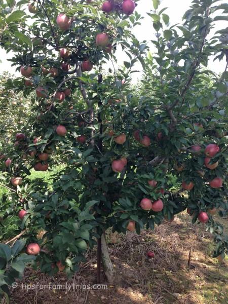 Marker Miller Orchard