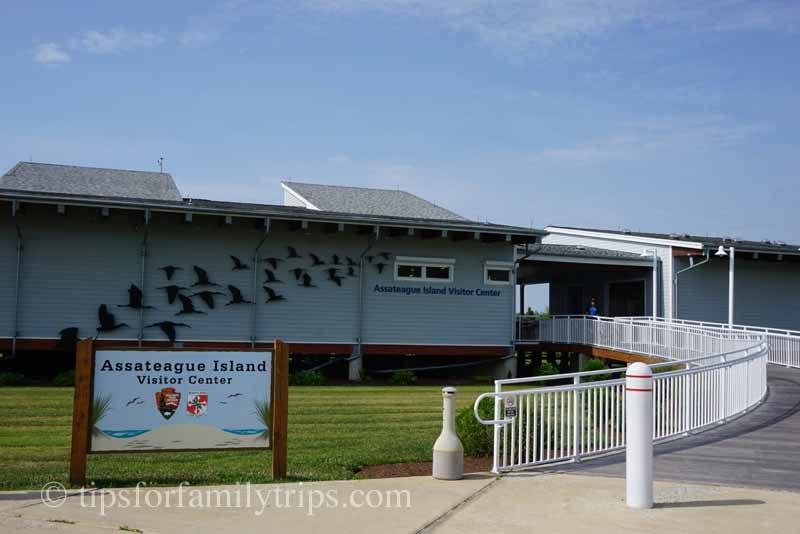 See Wild Ponies at Assateague Island National Seashore | tipsforfamilytrips.com