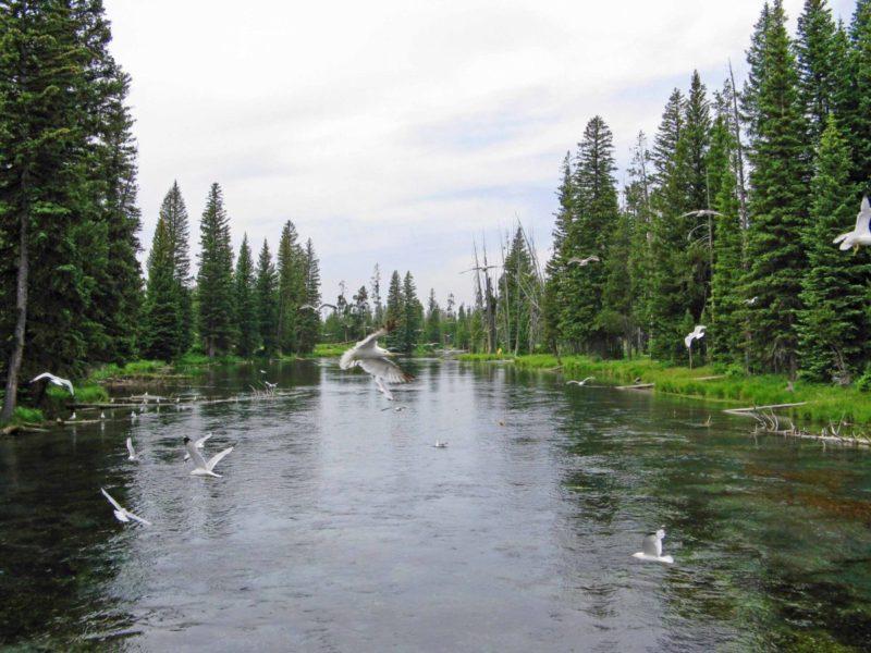 4 fun reasons to visit Henrys Lake State Park in Idaho | tipsforfamilytrips.com | Island Park | Yellowstone National Park | fishing | outdoors | family reunion | summer vacation