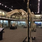 The Museum of Osteology is the coolest museum you've never heard of