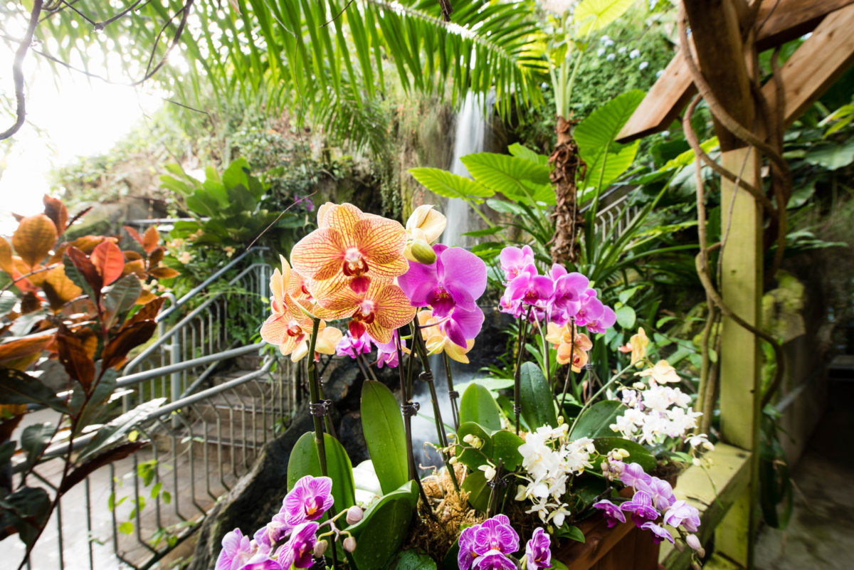 tips for visiting myriad gardens crystal bridge tropical conservatory