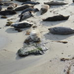 Where To See Seals And Sea Lions In San Diego