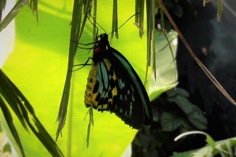 Butterfly Pavilion - Things to do in Denver with kids